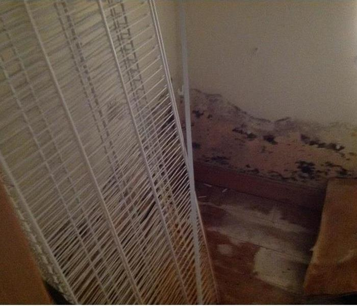 Mold Remediation What to do if you think you have mold?